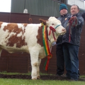 Barryroe Yearling Heifer Champion 'Ballingar Fay'
