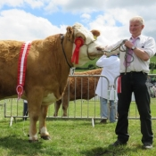 Cork Champion 'Clonagh Willow'