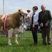 Midleton Show Champion \'Clonagh Delightly Fabulous\'