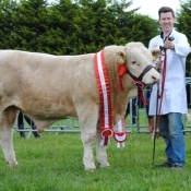 Oldcastle Champion 'Dermotstown Franco'