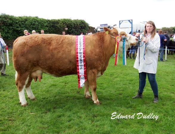 Bandon Show Overall Champion 'Clonagh Willow'