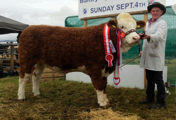 Bantry Show Overall Simmental Champion 'Raceview Faustina Wynty'