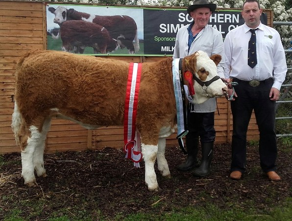 Barryroe Overall Breed_Inter Calf_Sth Club Yearling Heifer Champ Raceview Gypsy Verona