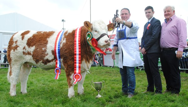 Bonniconlon Show Champion & Interbreed Champion 'Tawley Gretta'