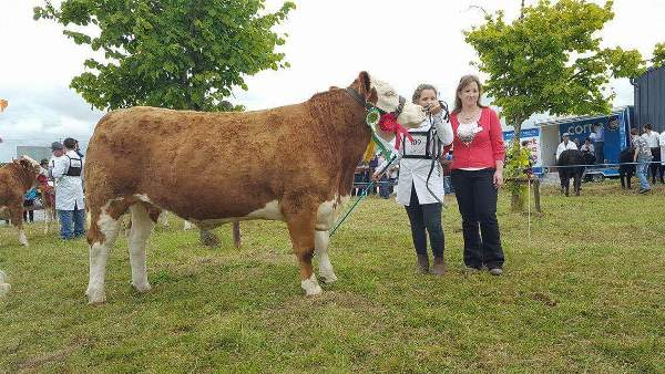 Claremorris Show Champion 'Lisnacrann Elegant Start'