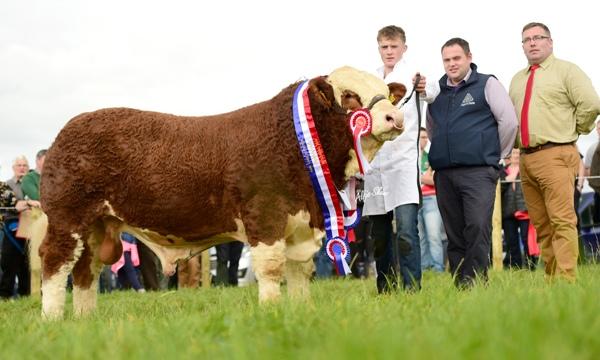 Ploughing 2016 Champion 'Coose Gambler'