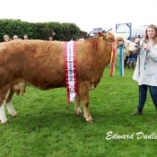 Bandon Show Overall Champion 'Clonagh Willow'