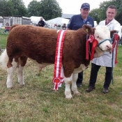 Charleville Show Male Champion 'Seaview Gladiator'