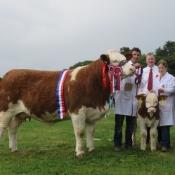 Co Louth Show Champion & Interbreed Champion 'Kilbride Farm Eunice 168E'