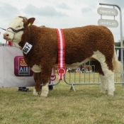 Cork Show Champion 'Corbally Goddess'
