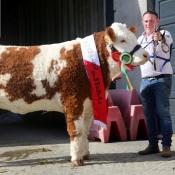 Glenamaddy Show Champion 'Tawley Gretta'