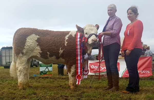 Bantry 2017 Champion 'Dripsey Honey Heart ET'