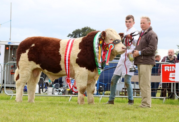 Cappamore 2017 Champion Simmental, Club Champion & Champion Yearling Bull 'Mount Hawkeye'