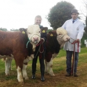 Belgooly 2017 Interbreed Pairs Champions 'Mohona Simmentals'