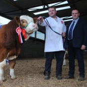 3rd Spring Sale Roscommon Champion 'Doire-Goile Hughie'
