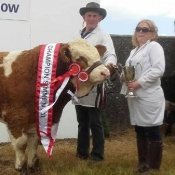 Clonakilty 2017 Interbreed Beef Calf & Overall Simmental Champion & 1st Bull Calf Class 'Raceview Hermon'