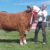 Cork 2017 Champion Simmental & 3rd Beef Interbreed Champion 'Corbally Goddess Vintage Katie'