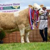 Tullamore 2017 Overall Simmental Champion 'Clonagh Darling Eyes ET'