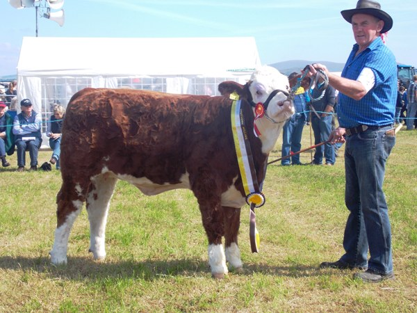 Bantry Southern Club Junior Heifer Calf Champion 'Raceview Fenella Beauty'