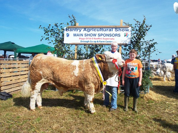 Bantry Southern Club Senior Bull Calf Champion 'Dripsey Elvis Aaron'