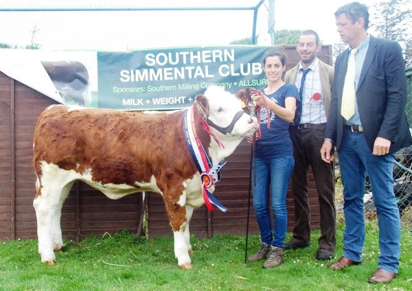 Barryroe Southern Simmental Club Oct-Nov Heifer Champion 'Mohona Eileen'