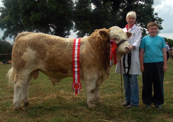 Charleville Show Male Champion 'Dripsey Eddie Rocket'