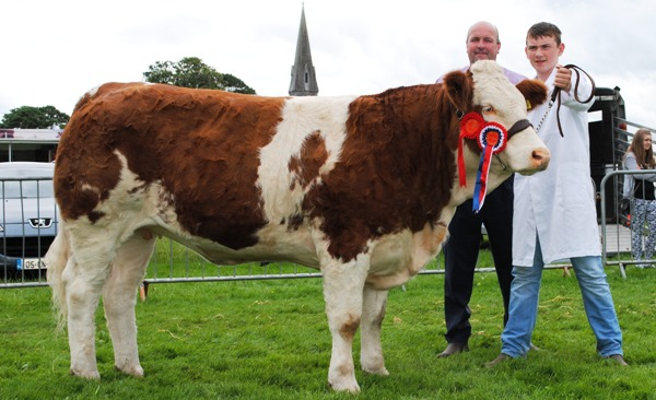 Oldcastle Simmental Champion 'Fohera Emma'