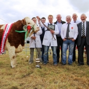 Ballina Show Champion & Interbreed Champion 'Fearne Destiny'