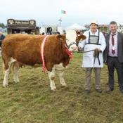 Claremorris McWilliam All Ireland Pedigree Suckler Heifer