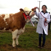 Midleton Reserve Champion 'Clonagh Delightfully Fabulous'