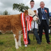 Virginia Overall Champion 'Clonguish Elegant'