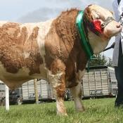 Greenvale Animal Feeds Yearling Bull Champion 'Clonagh Diamond Rock'