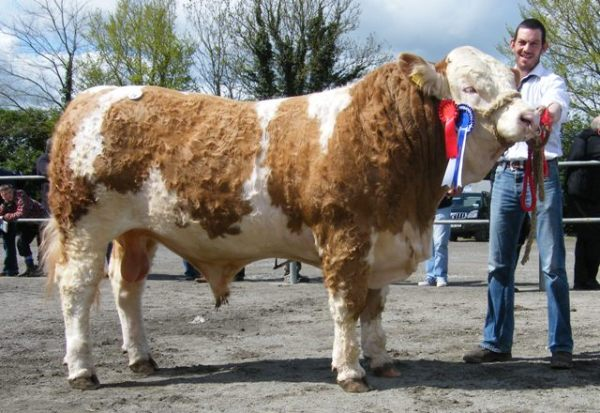 Reserve Male 'Clonagh Cracker Rex' €4900
