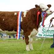 raceview_abbey_princess_nat_junior_heifer_female__res_overall_champ
