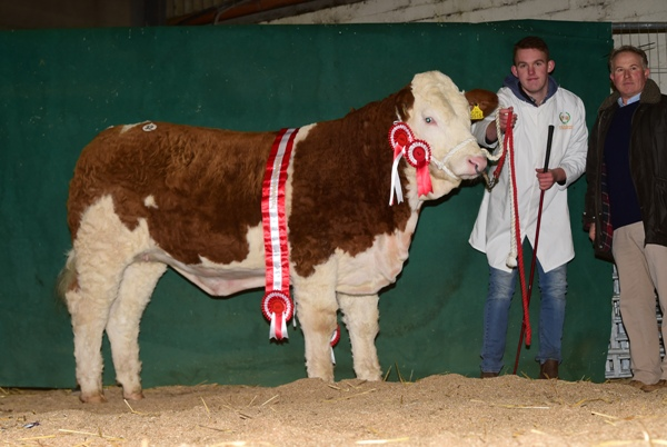 Tullamore 081217 Champion Heifer 'Shiloh Happy Royal' €3000