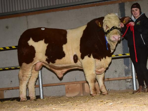 Tullamore 081217 Kilkitt High Star €3000