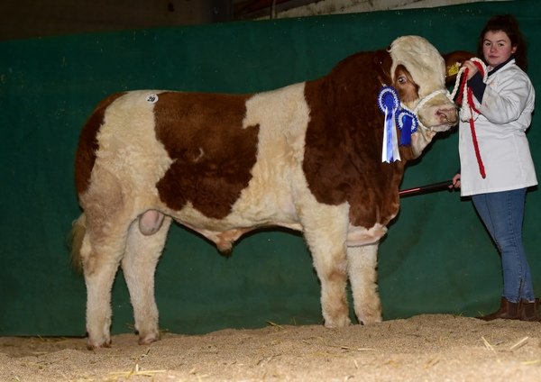 Tullamore 081217 Reserve Champion Bull 'Shiloh-Farm Humdinger' €4100