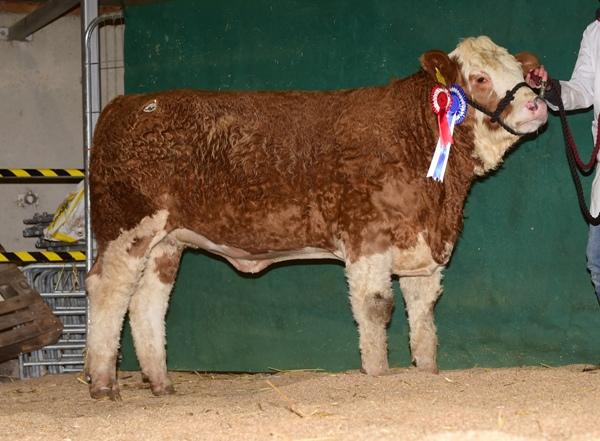 Tullamore 081217 Reserve Champion Heifer 'Mount Hillary' €2500