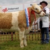 raceview_vivian_nat_intermediate_heifer_champ