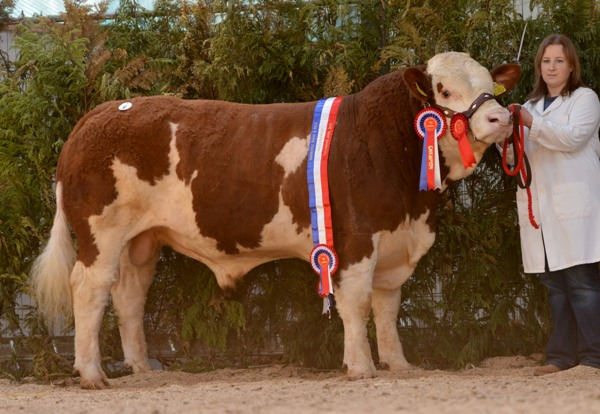Male Champion Towerhill Emmett €4000