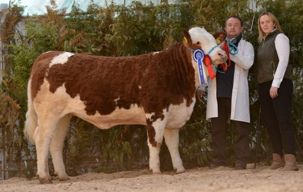 Reserve Female Cruithill Ebba €4650