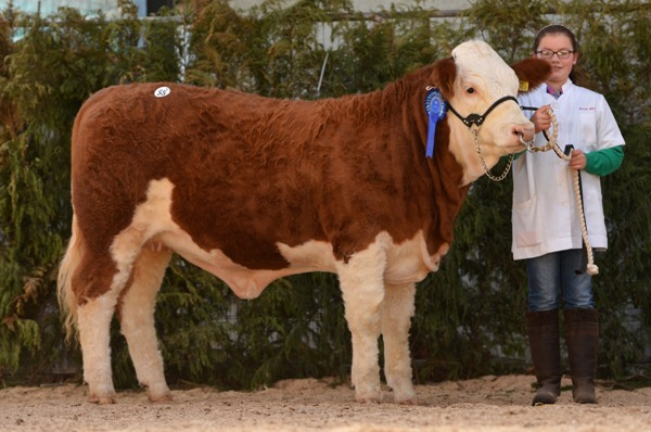 Shiloh-Farm Fancy Lady €2010