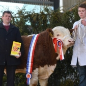 Tullamore Show & Sale Male Champion 2014