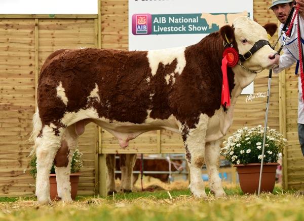 Junior Bull Calf Class Winner 'Clonagh General Almighty'