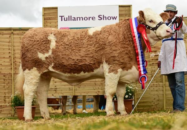 National Intermediate Heifer Champion 'Jennalyn Elegant Rose'