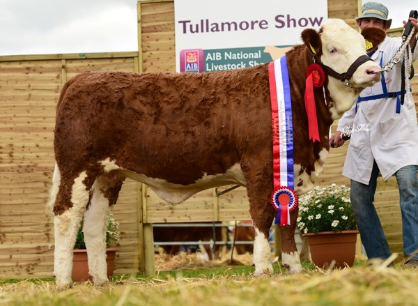 National Weanling Heifer Champion 'Clonagh Fame and Fortune'