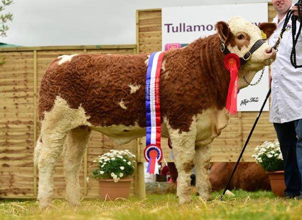 National Yearling Heifer Champion 'Brookwood Fancy Lady ET'