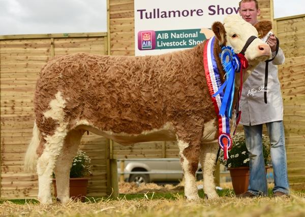 Overall Reserve, Female Reserve & Junior Heifer Champion 'Clonguish Elegant'