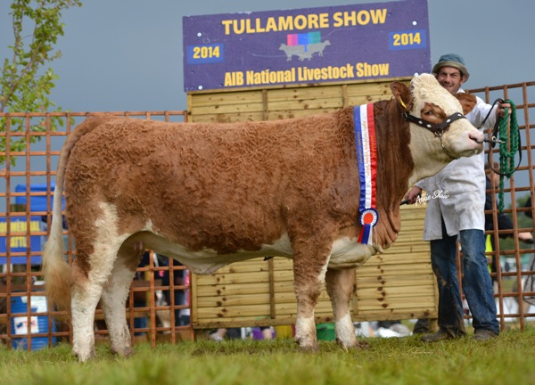 National Intermediate Heifer 'Jennalyn Dee Duffy'