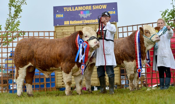 National Junior Progeny Pair Champions – Carbery Simmentals